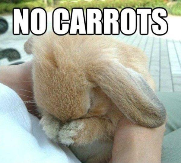 rabbit2342