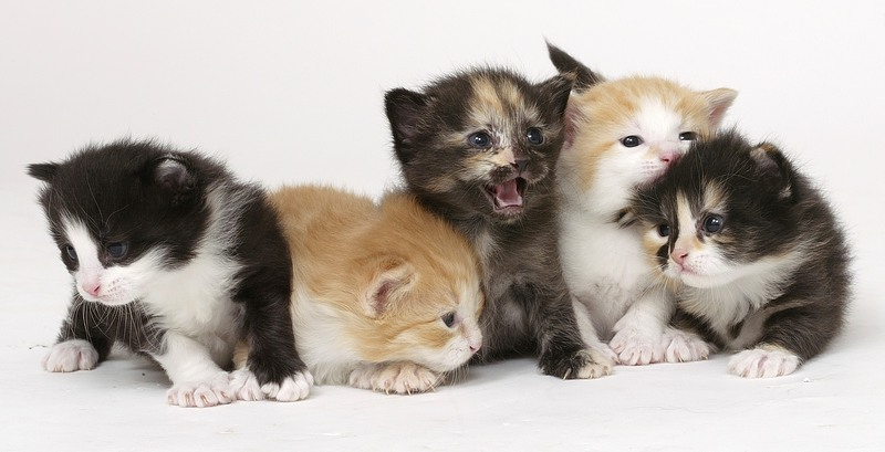 Goodness a group of kittens just melts my heart look how cute they