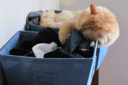 RILEY TAKING A NAP IN A BIN FULL OF CHARLIE'S SOCKS.