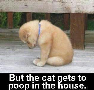 Funny Puppy And Baby Pictures With Captions