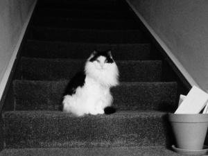 Isn't my Clara girl beautiful? I love this cat so much.