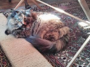 Hello pretty kitty
