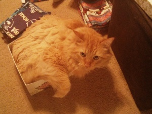 "RILEY: ""What? I totally fit in this little box."""
