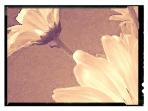 I love that the flower picture looks like a painting (others may think differently). During the editing process of one flower picture, the corner of the photo caught my eye for some reason. With the original photo, I cropped and heavily edited the corner piece. And I just love the end result. I have no idea what I will do with these random pictures besides sharing them on my blog.